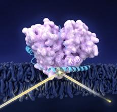 parkinsons proteins